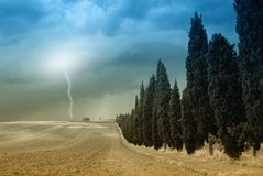 Lightning over cypress in plowed field Royalty Free Stock Photography
