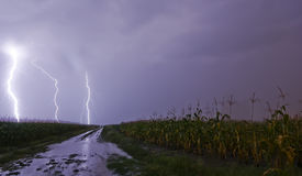Lightning storm corn field Royalty Free Stock Images