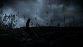 Lightning storm in a forest. This video clip features a heavy lightning storm in a forest at night stock video footage
