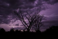 A lightning storm silhouettes the trees on a Kansas summer night. Lightning tearing through the purple sky behind silhouetted trees on a warm Kansas summer night Stock Image