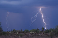 Lightning Striking the high desert. With saguaros Royalty Free Stock Image