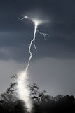 Lightning striking a tree Stock Image