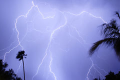 Lightning Thunderstorm. With massive lightningbolts. Blue in color. Palm trees Royalty Free Stock Photography