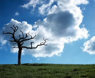 Lightning Tree. Tree in landscape that hasbeen struck by lightning Royalty Free Stock Images