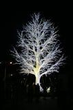 Lightning tree. White lightning tree in Astana city Stock Photography