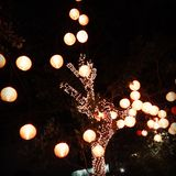 Lightning tree. Tree covered with lights and lantern Royalty Free Stock Images