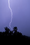 Lightning and a tree with dark blue sky Royalty Free Stock Photography