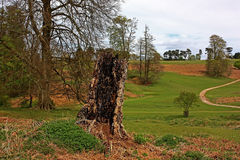 Lightning Tree Stock Photos