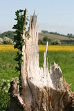 Lightning Tree Strike Stock Photography