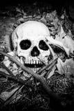 Lightpainted czaszka Zdjęcia Royalty Free
