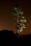 Lightpainted Tree in the Forest at Night Royalty Free Stock Photo