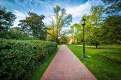 Lightpost和树沿一条道路在约翰霍普金斯大学,  库存图片