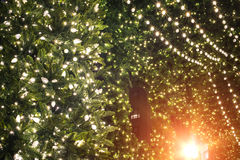 The lights on the Christmas tree decoration Stock Photography