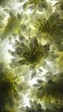 @Lights för vit blomma Arkivbilder