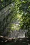 Lights in the forest. Rays of light in a romanian forest Royalty Free Stock Images