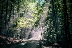 Lights in the forest. Rays of light in a romanian forest Royalty Free Stock Photos