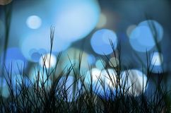 Lights and grass Royalty Free Stock Photo