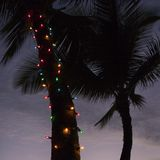 Lights on palm tree. Stock Photography