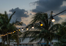 Lights and Palmtrees Royalty Free Stock Image