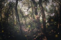 Lights sparkling in dark forest. Lights sparkling in dark mysterious forest stock photos