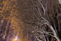 Lights on a street at Advent Stock Photography