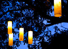 Lights in tree royalty free stock photo