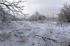 Ligne électrique et arbres à haute tension dans la neige L'Ukraine, décembre Image stock