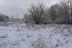 Ligne électrique et arbres à haute tension dans la neige L'Ukraine, décembre Photo libre de droits