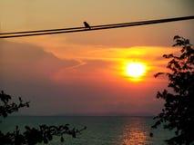 ligne électrique feuilles et arbre d'oiseau de silhouette de ciel de coucher du soleil Photographie stock libre de droits