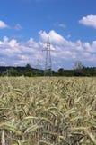 Ligne électrique sur le champ du seigle et de l'orge Maturation du secteur agraire de future récolte de l'industrie agricole Usin Photos stock