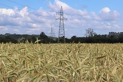Ligne électrique sur le champ du seigle et de l'orge Maturation du secteur agraire de future récolte de l'industrie agricole Usin photo stock