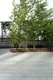 Ligne élevée New York City Parc piétonnier élevé Image stock