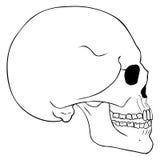 Ligne Art Side View Skull de vecteur Photographie stock libre de droits