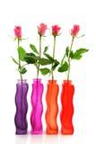 Ligne avec les roses colorées Photo libre de droits