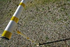 Ligne blanche et jaune route barier, risque avertissant près de la route goudronnée Photo libre de droits