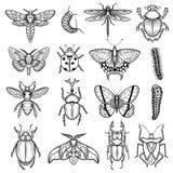 Ligne blanche noire icônes d'insectes réglées Image stock