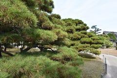 Ligne d'aparté japonais de pin de passage couvert Photographie stock