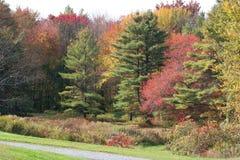 Ligne d'arbre de couleurs d'automne Photos libres de droits