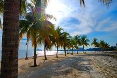 Ligne d'arbre de noix de coco photo stock