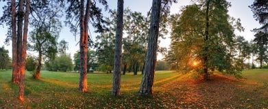 Ligne d'arbre forestier Image stock