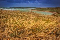 Ligne de côte en vent, Nouvelle-Zélande Photo stock