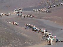 ligne de chameaux Images libres de droits