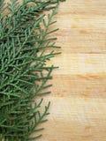 Ligne de feuille de cyprès de cèdre sur le fond en bois Images stock