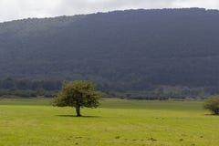 ligne de floraison arbres de printemps Photos libres de droits