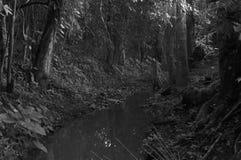 Ligne de flottaison de forêt image stock