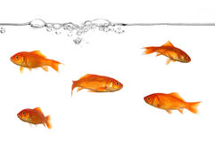 Ligne de flottaison et poissons d'or Photographie stock