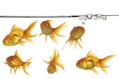 Ligne de flottaison et poissons d'or Photos stock