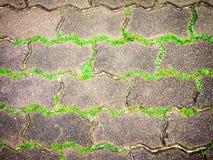 Ligne de mauvaises herbes Photos libres de droits