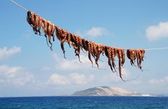 Ligne de poulpe, Nisyros Photographie stock