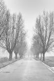 Ligne de route avec des arbres Images libres de droits